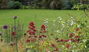 Top 10 everlasting perennials