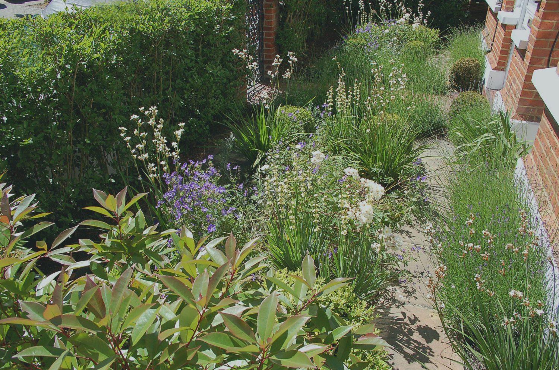 Front Garden Oasis Living Colour Gardens