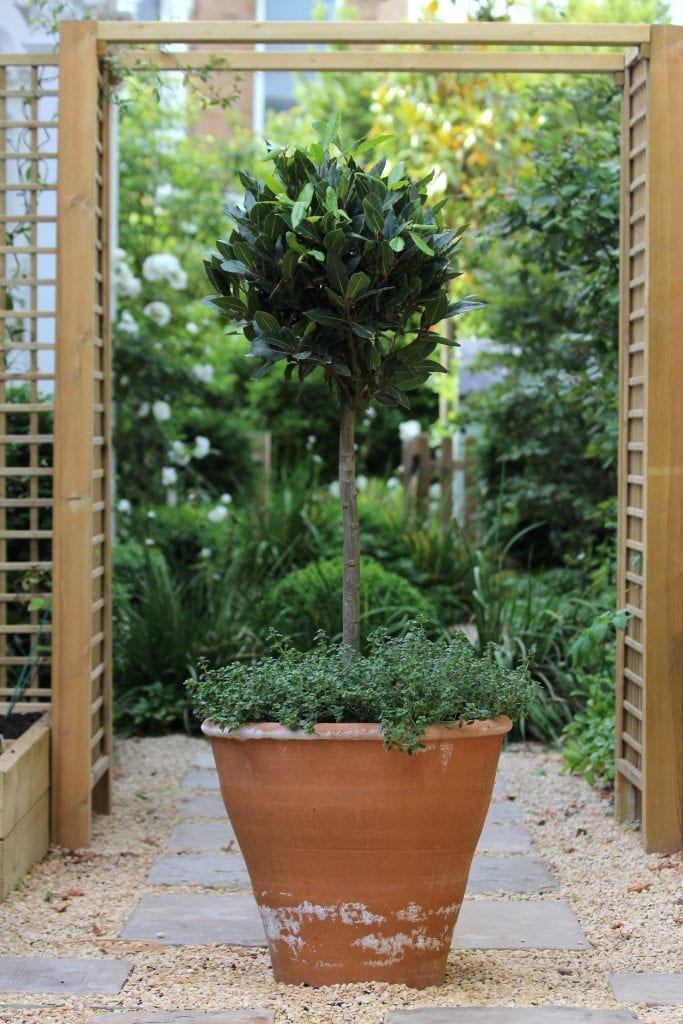 Top 10 best trees for small gardens living colour gardens for Popular small trees