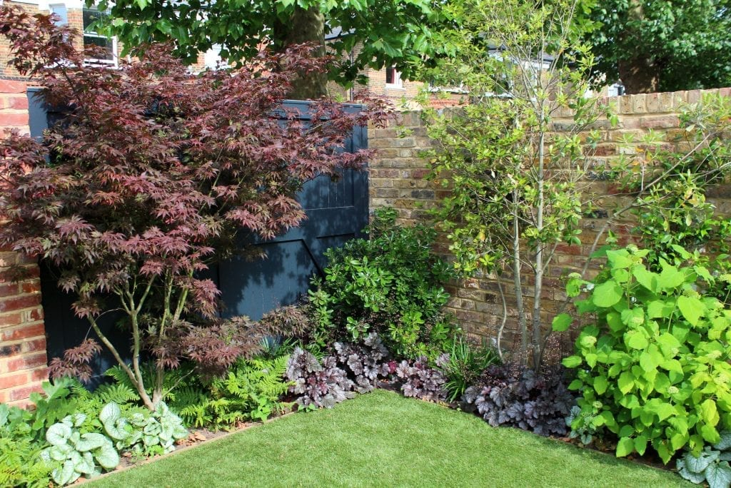 Best trees for small gardens flowers gallery for Garden law trees