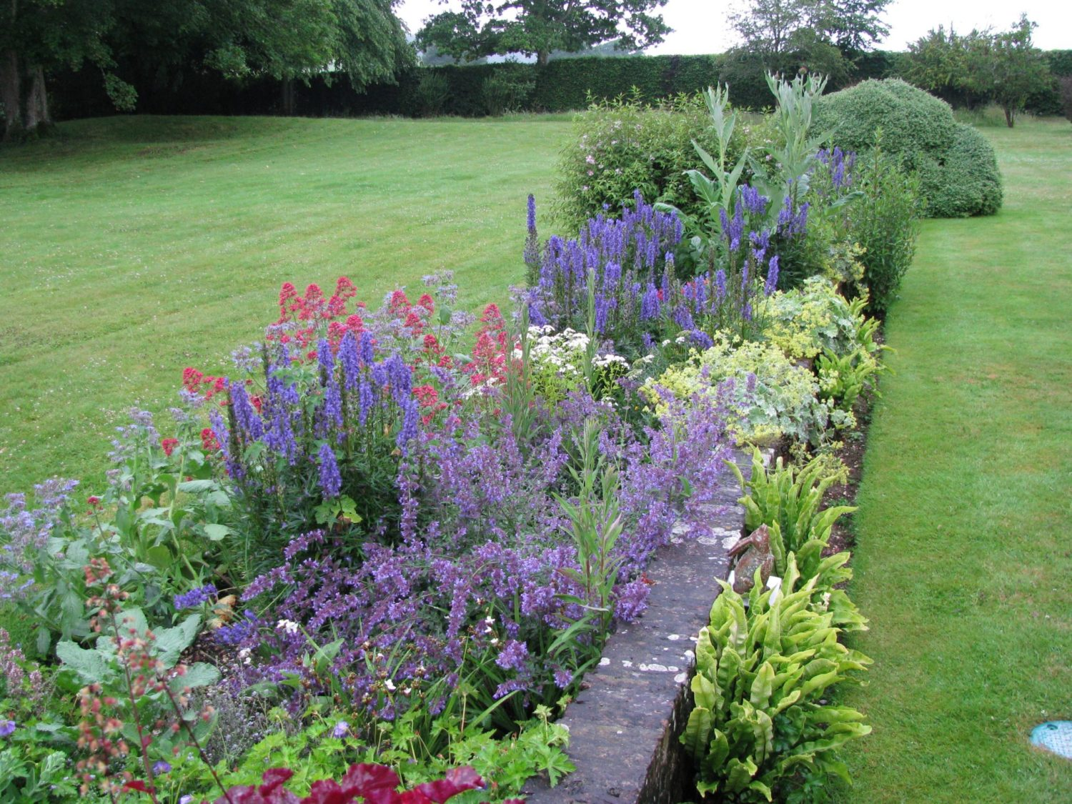 Top 10 plants for cottage style borders - Living Colour ...